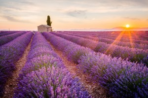 Provence-foto-ronnybas
